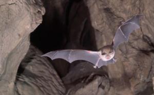 خفاش و معماری