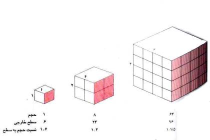 نسبت حجم به سطح